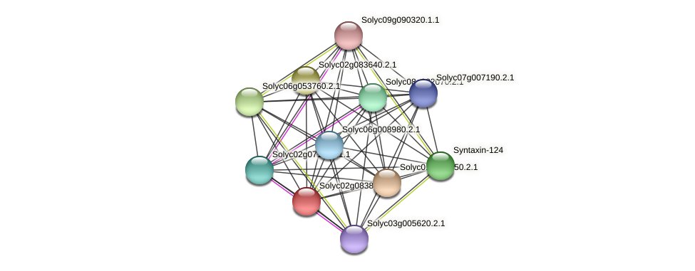 Solyc02g083890.2.1 protein (Solanum lycopersicum) - STRING interaction network