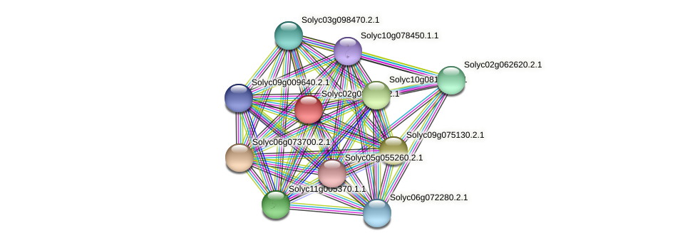 Solyc02g084020.2.1 protein (Solanum lycopersicum) - STRING interaction network
