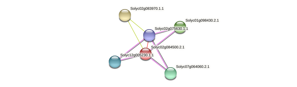 Solyc02g084500.2.1 protein (Solanum lycopersicum) - STRING interaction network