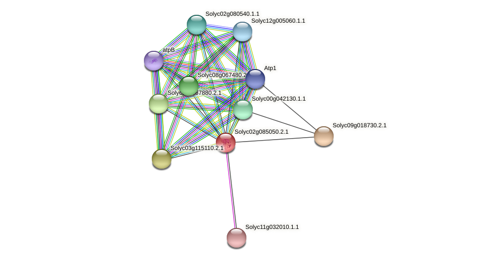 Solyc02g085050.2.1 protein (Solanum lycopersicum) - STRING interaction network