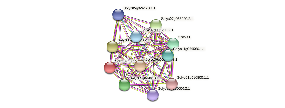 Solyc02g085220.2.1 protein (Solanum lycopersicum) - STRING interaction network