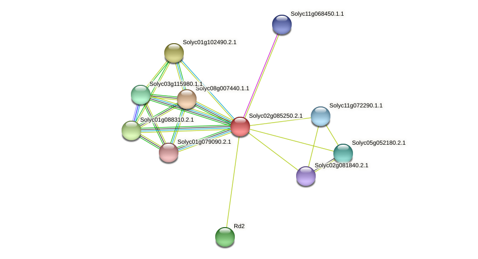 101259799 protein (Solanum lycopersicum) - STRING interaction network