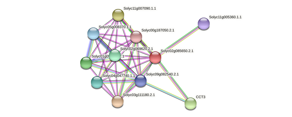 Solyc02g085650.2.1 protein (Solanum lycopersicum) - STRING interaction network