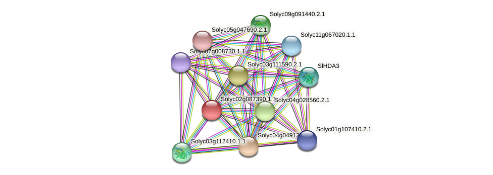 Solyc02g087390.1.1 protein (Solanum lycopersicum) - STRING interaction network
