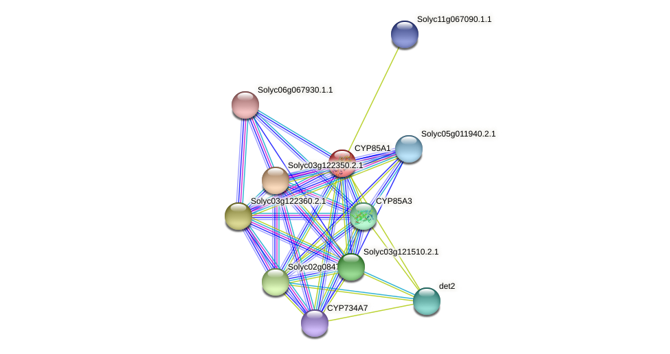 CYP85A1 protein (Solanum lycopersicum) - STRING interaction network