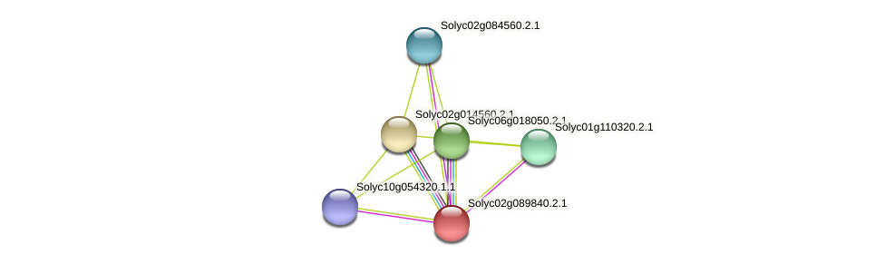 Solyc02g089840.2.1 protein (Solanum lycopersicum) - STRING interaction network