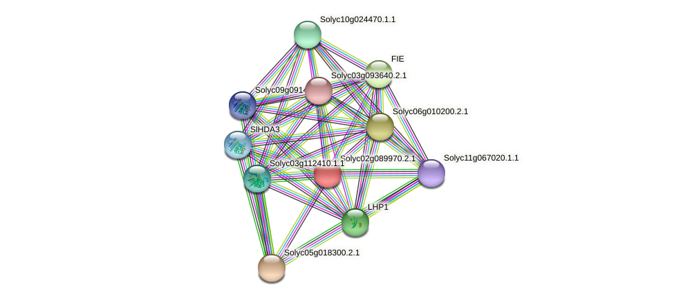 Solyc02g089970.2.1 protein (Solanum lycopersicum) - STRING interaction network