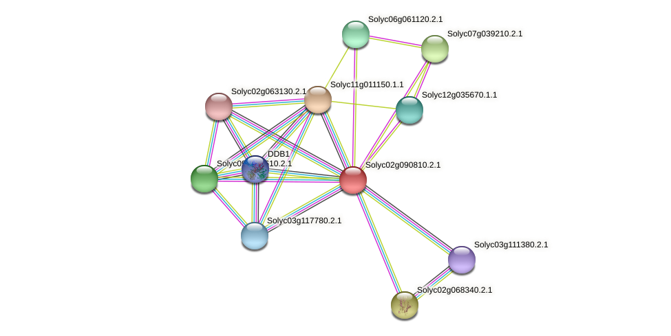 Solyc02g090810.2.1 protein (Solanum lycopersicum) - STRING interaction network