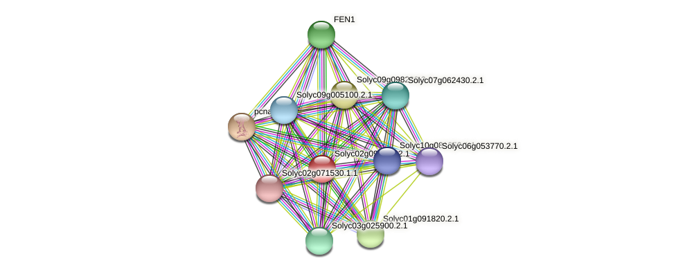 Solyc02g091120.2.1 protein (Solanum lycopersicum) - STRING interaction network