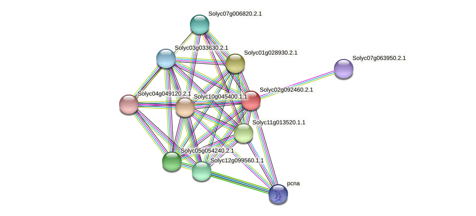 Solyc02g092460.2.1 protein (Solanum lycopersicum) - STRING interaction network