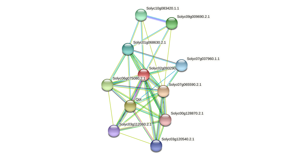 101264576 protein (Solanum lycopersicum) - STRING interaction network
