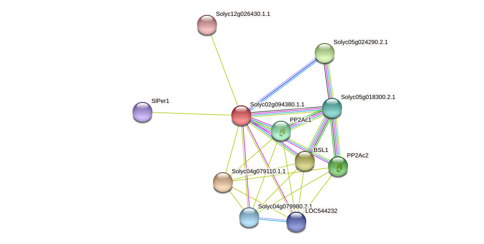 Solyc02g094380.1.1 protein (Solanum lycopersicum) - STRING interaction network