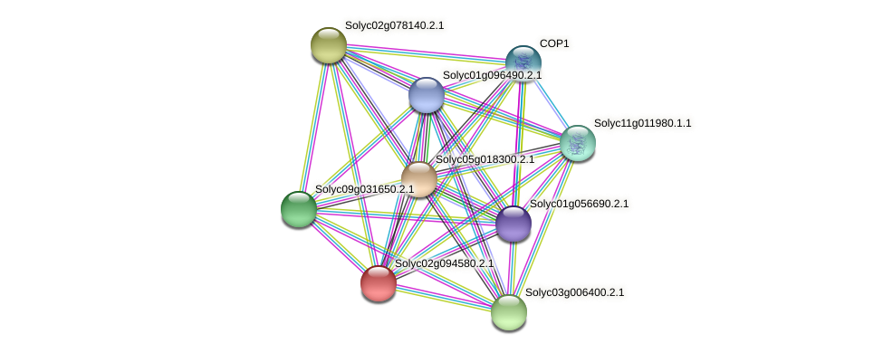 Solyc02g094580.2.1 protein (Solanum lycopersicum) - STRING interaction network