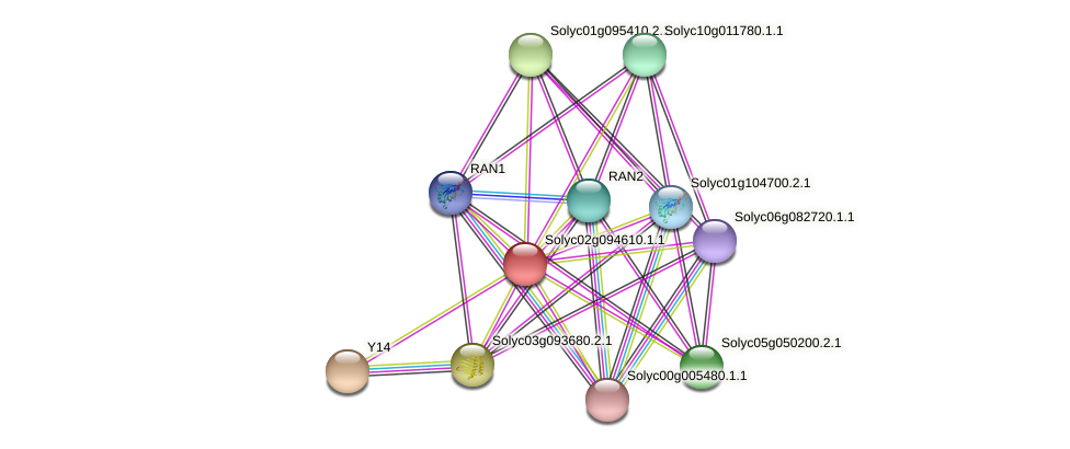 Solyc02g094610.1.1 protein (Solanum lycopersicum) - STRING interaction network