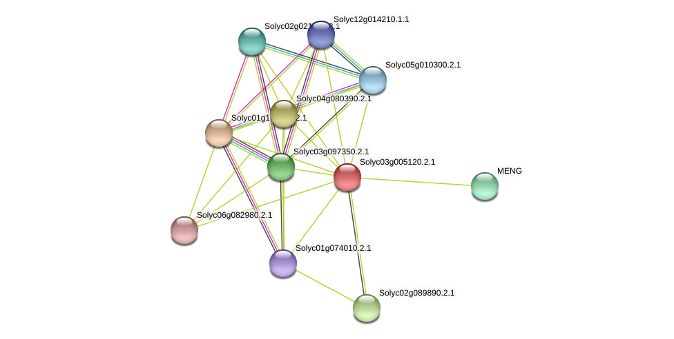 Solyc03g005120.2.1 protein (Solanum lycopersicum) - STRING interaction network