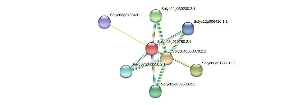 Solyc03g019750.2.1 protein (Solanum lycopersicum) - STRING interaction network
