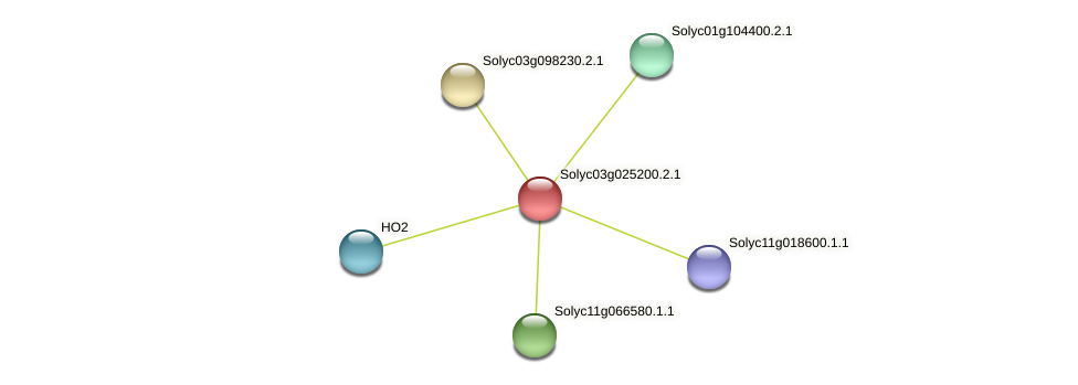 Solyc03g025200.2.1 protein (Solanum lycopersicum) - STRING interaction network