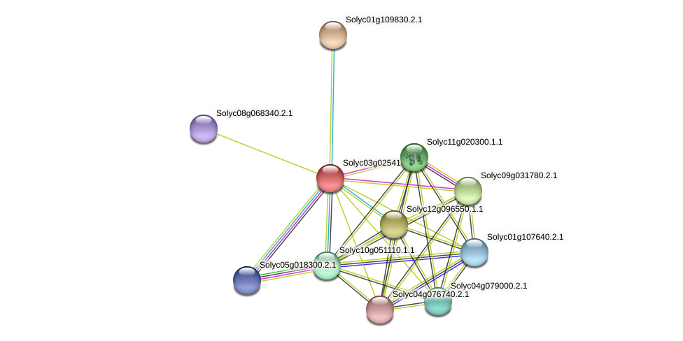 101257442 protein (Solanum lycopersicum) - STRING interaction network