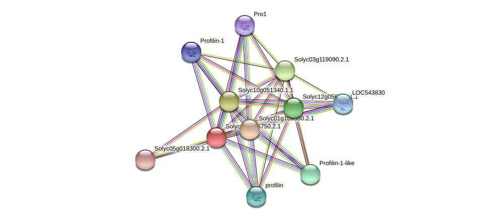 Solyc03g025750.2.1 protein (Solanum lycopersicum) - STRING interaction network