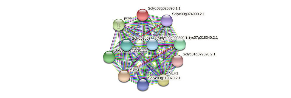 Solyc03g025890.1.1 protein (Solanum lycopersicum) - STRING interaction network