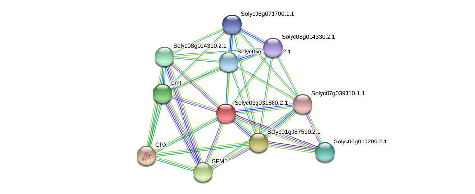 Solyc03g031880.2.1 protein (Solanum lycopersicum) - STRING interaction network