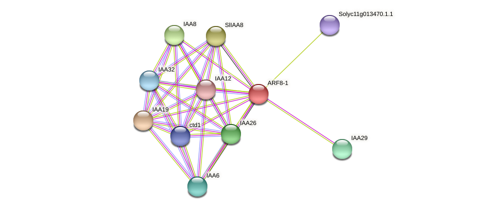 ARF8-1 protein (Solanum lycopersicum) - STRING interaction network