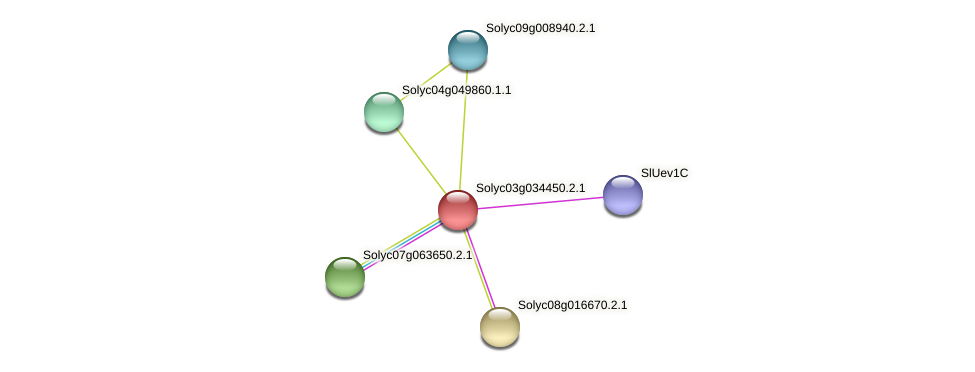Solyc03g034450.2.1 protein (Solanum lycopersicum) - STRING interaction network