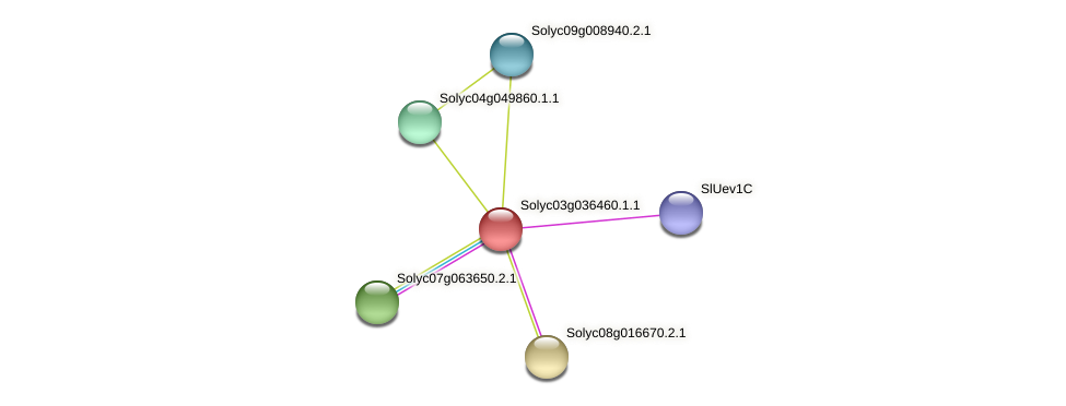 Solyc03g036460.1.1 protein (Solanum lycopersicum) - STRING interaction network