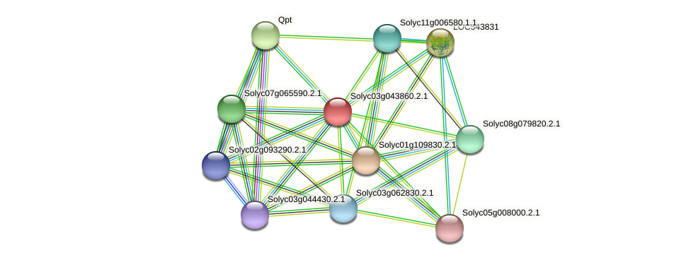 Solyc03g043860.2.1 protein (Solanum lycopersicum) - STRING interaction network