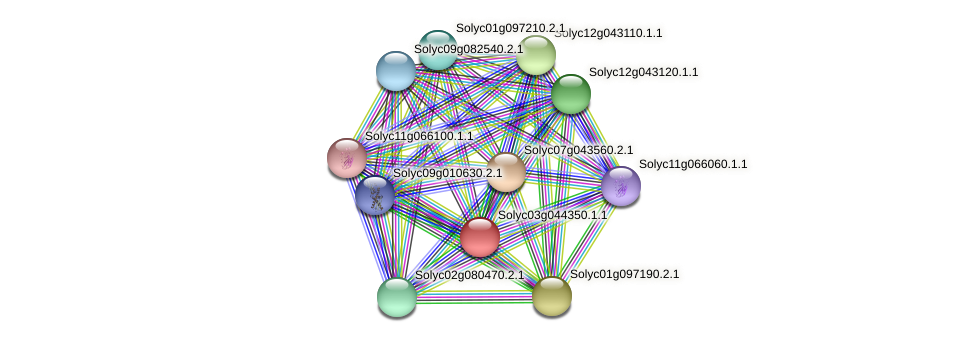 Solyc03g044350.1.1 protein (Solanum lycopersicum) - STRING interaction network