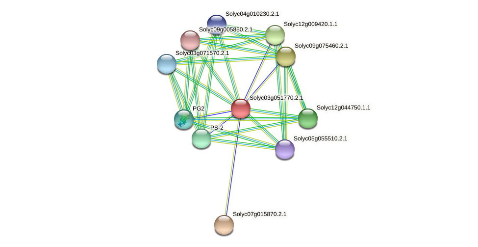 Solyc03g051770.2.1 protein (Solanum lycopersicum) - STRING interaction network