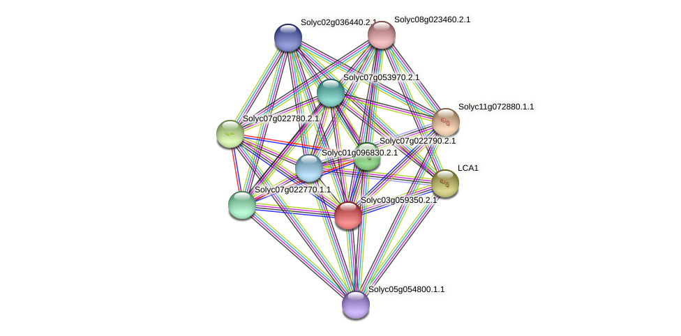 Solyc03g059350.2.1 protein (Solanum lycopersicum) - STRING interaction network