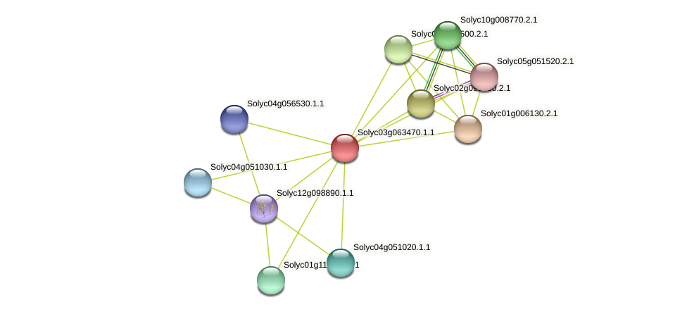 Solyc03g063470.1.1 protein (Solanum lycopersicum) - STRING interaction network