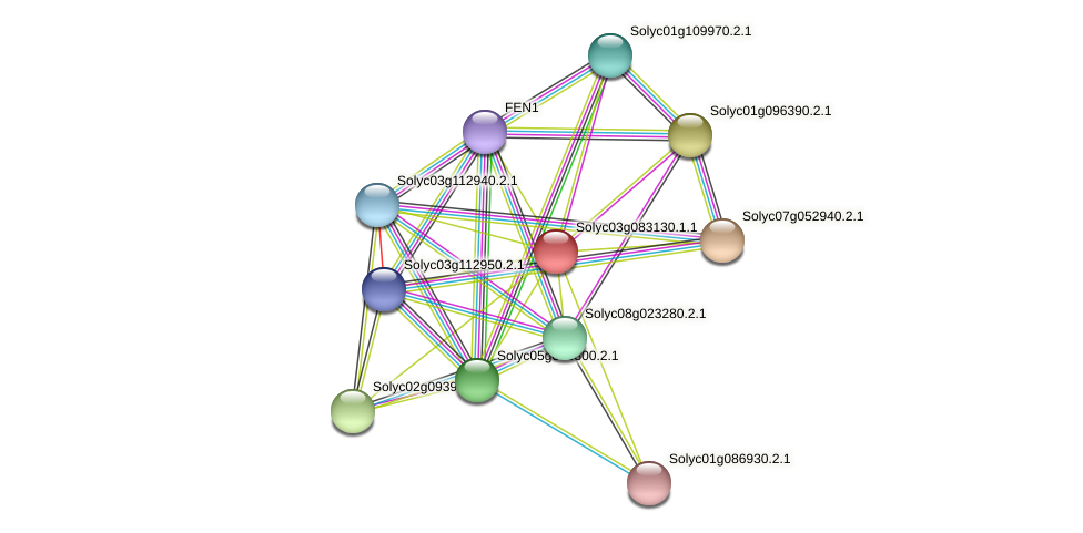 Solyc03g083130.1.1 protein (Solanum lycopersicum) - STRING interaction network