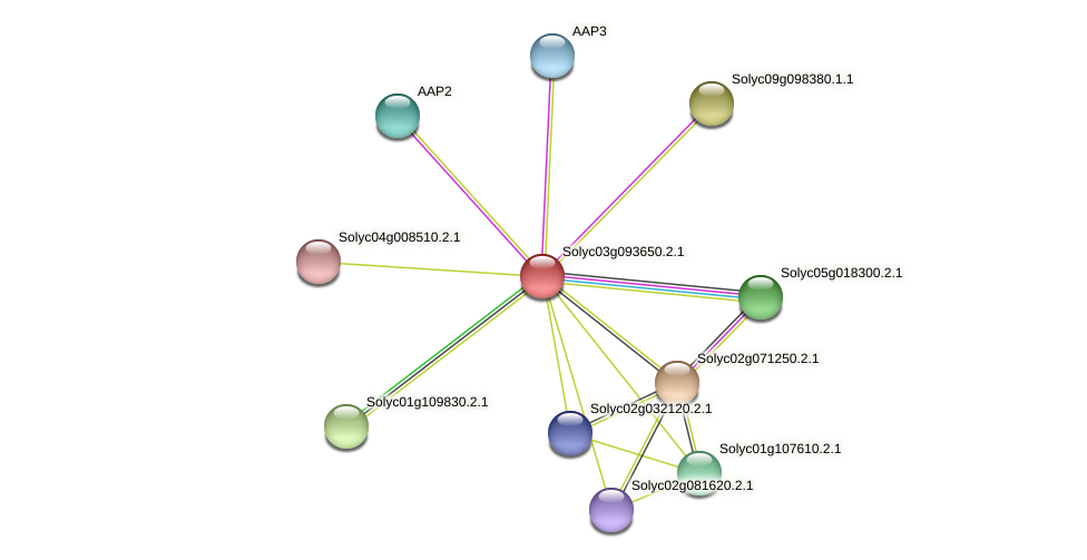 Solyc03g093650.2.1 protein (Solanum lycopersicum) - STRING interaction network