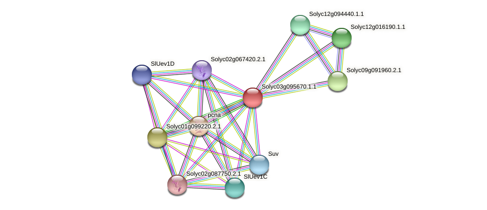 Solyc03g095670.1.1 protein (Solanum lycopersicum) - STRING interaction network