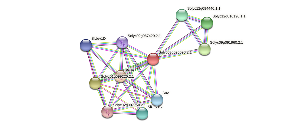 Solyc03g095690.2.1 protein (Solanum lycopersicum) - STRING interaction network