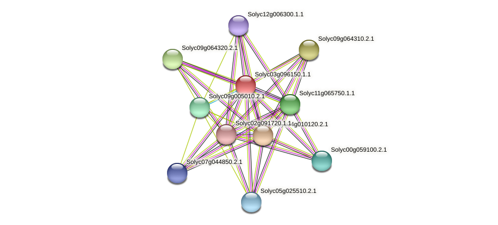 Solyc03g096150.1.1 protein (Solanum lycopersicum) - STRING interaction network