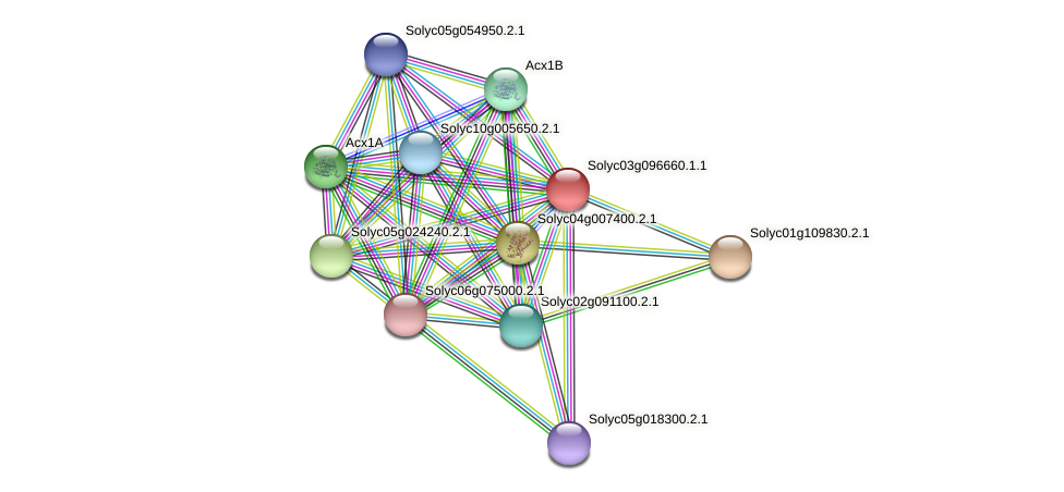 Solyc03g096660.1.1 protein (Solanum lycopersicum) - STRING interaction network