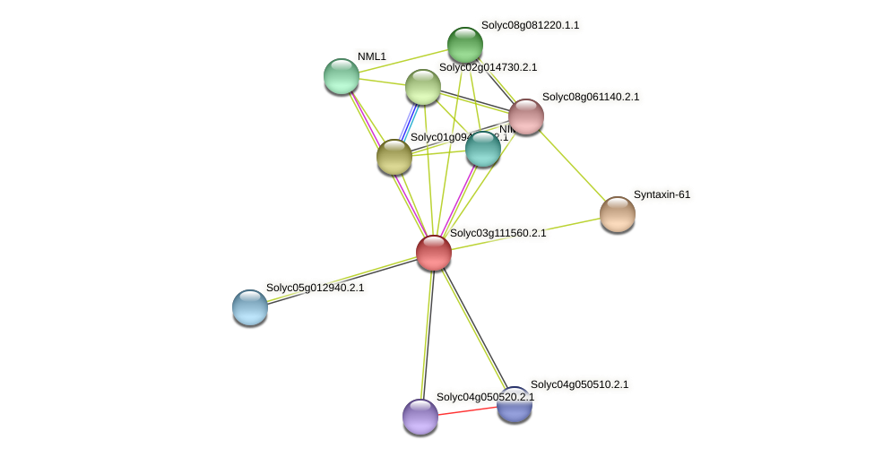 Solyc03g111560.2.1 protein (Solanum lycopersicum) - STRING interaction network