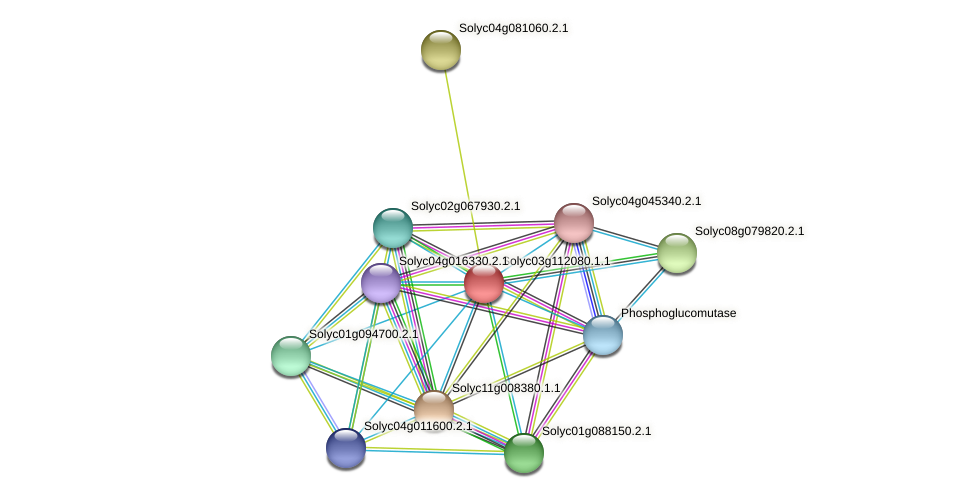 Solyc03g112080.1.1 protein (Solanum lycopersicum) - STRING interaction network