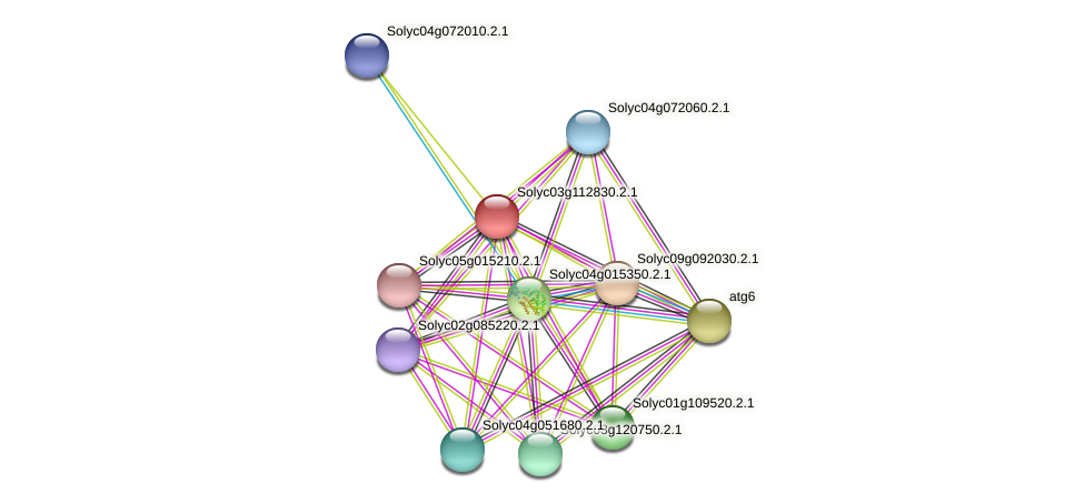 Solyc03g112830.2.1 protein (Solanum lycopersicum) - STRING interaction network