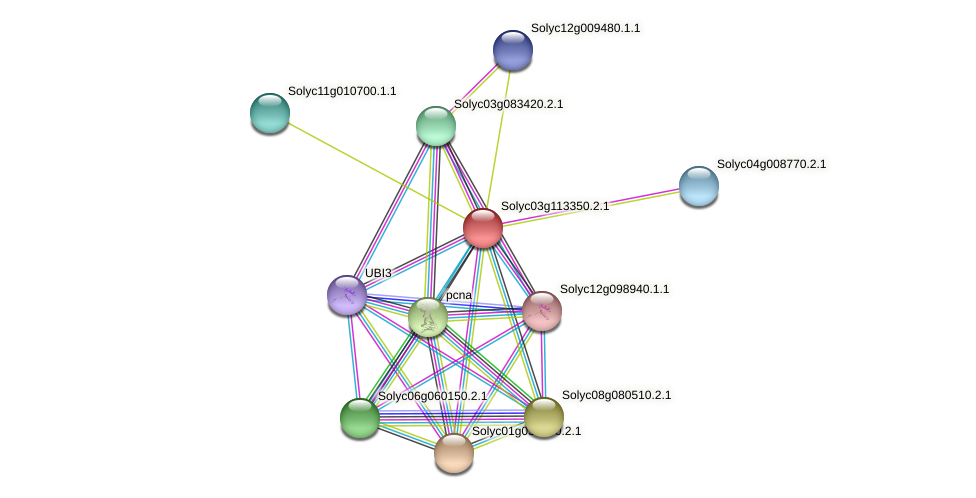 Solyc03g113350.2.1 protein (Solanum lycopersicum) - STRING interaction network