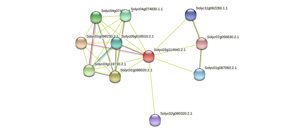 Solyc03g114940.2.1 protein (Solanum lycopersicum) - STRING interaction network