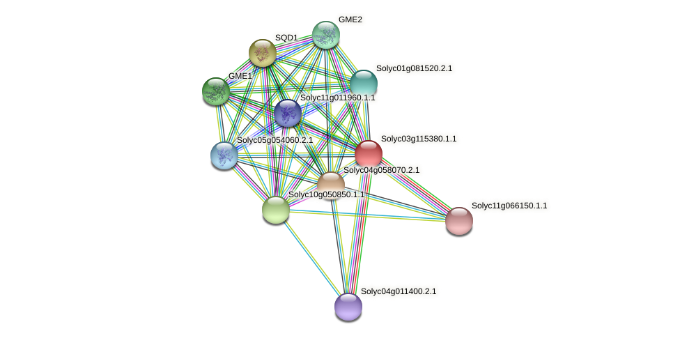 Solyc03g115380.1.1 protein (Solanum lycopersicum) - STRING interaction network