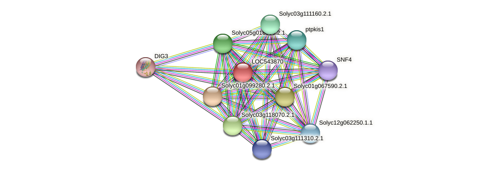 LOC543870 protein (Solanum lycopersicum) - STRING interaction network