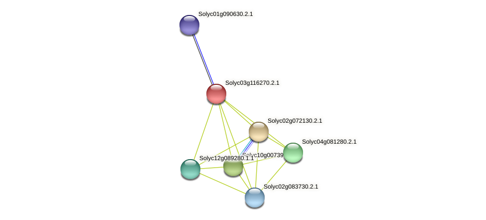 Solyc03g116270.2.1 protein (Solanum lycopersicum) - STRING interaction network