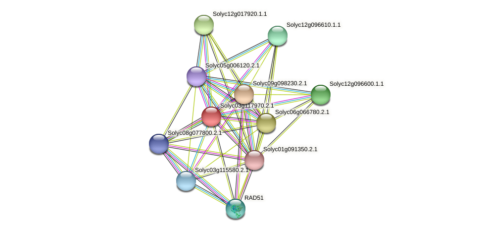 Solyc03g117970.2.1 protein (Solanum lycopersicum) - STRING interaction network