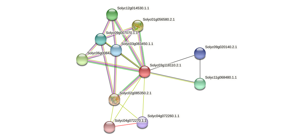 Solyc03g118110.2.1 protein (Solanum lycopersicum) - STRING interaction network