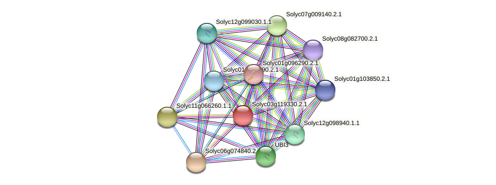 Solyc03g119330.2.1 protein (Solanum lycopersicum) - STRING interaction network